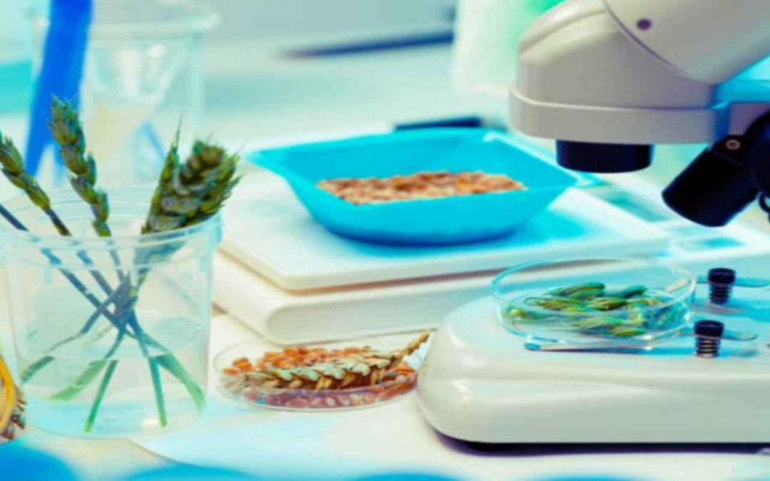 IoT and Big Data: A Revolution in Food Safety