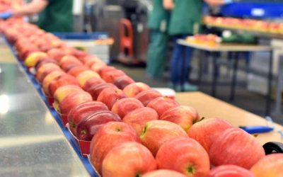 Importance of an Effective Supply Chain and Logistics Process in the F&B Industry