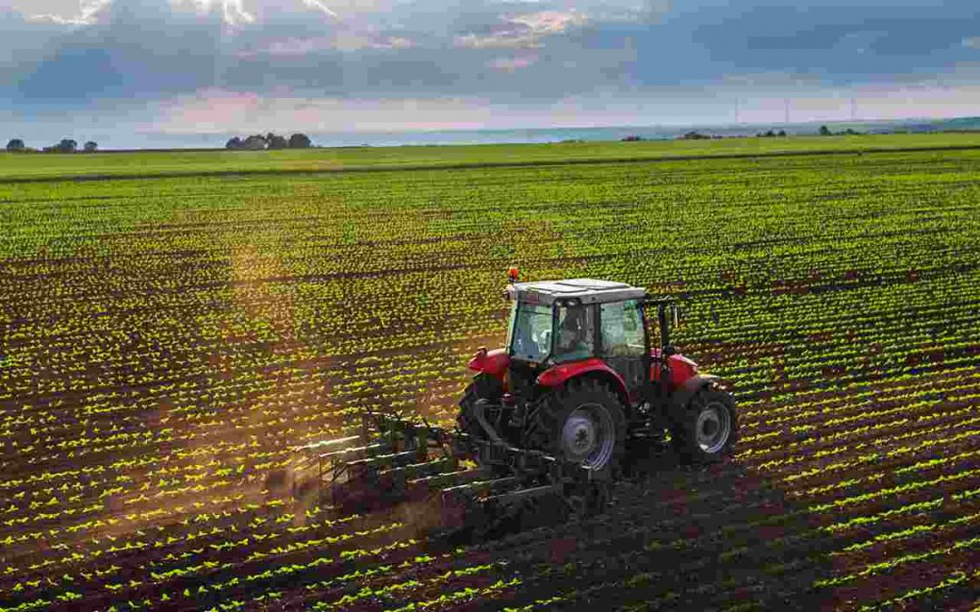 Is Organic Farming the Future of the Agricultural Industry?